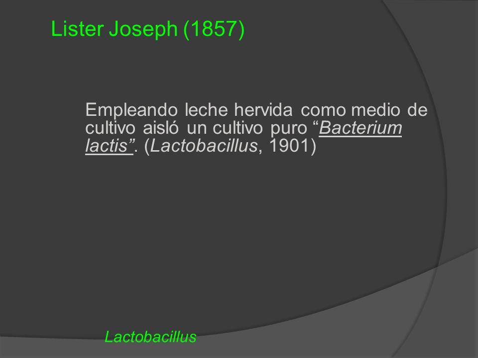 Lister Joseph (1857) Empleando leche hervida como medio de cultivo aisló un cultivo puro Bacterium lactis . (Lactobacillus, 1901)