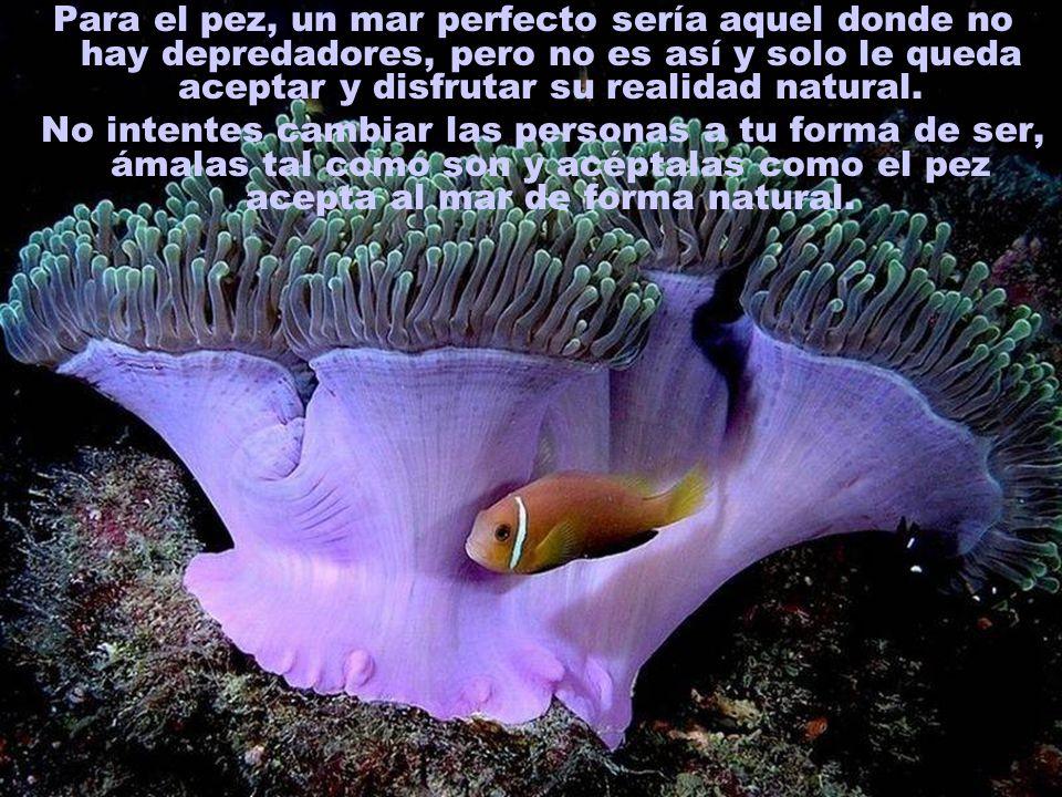 Para el pez, un mar perfecto sería aquel donde no hay depredadores, pero no es así y solo le queda aceptar y disfrutar su realidad natural.