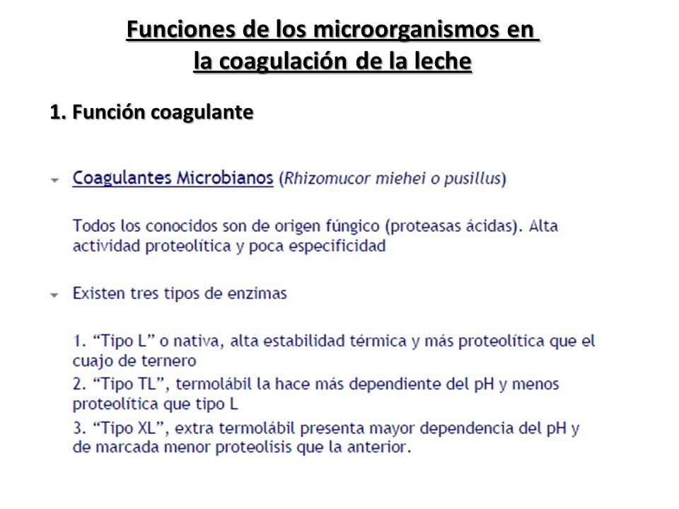 Funciones de los microorganismos en la coagulación de la leche
