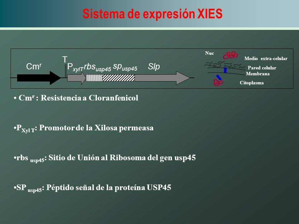 Sistema de expresión XIES
