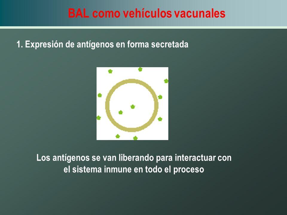 BAL como vehículos vacunales