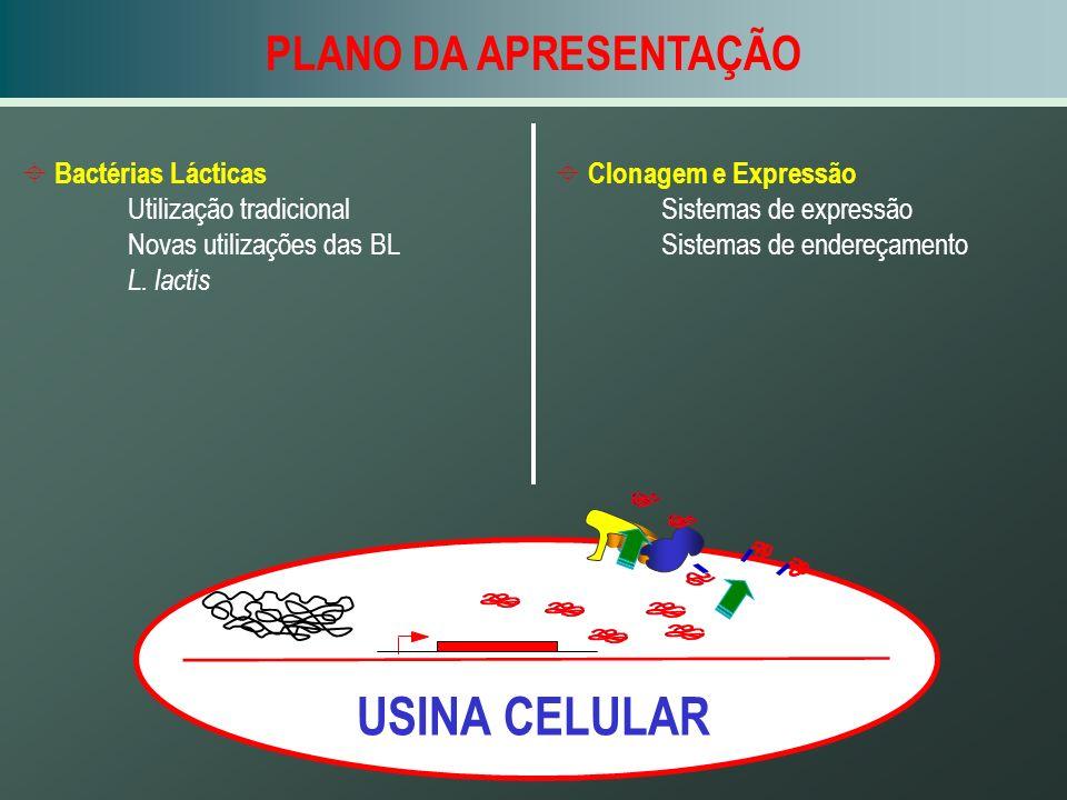 USINA CELULAR PLANO DA APRESENTAÇÃO Bactérias Lácticas