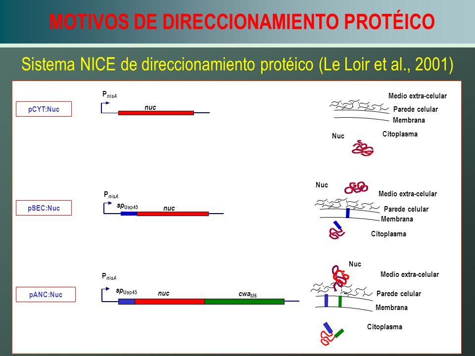 Sistema NICE de direccionamiento protéico (Le Loir et al., 2001)