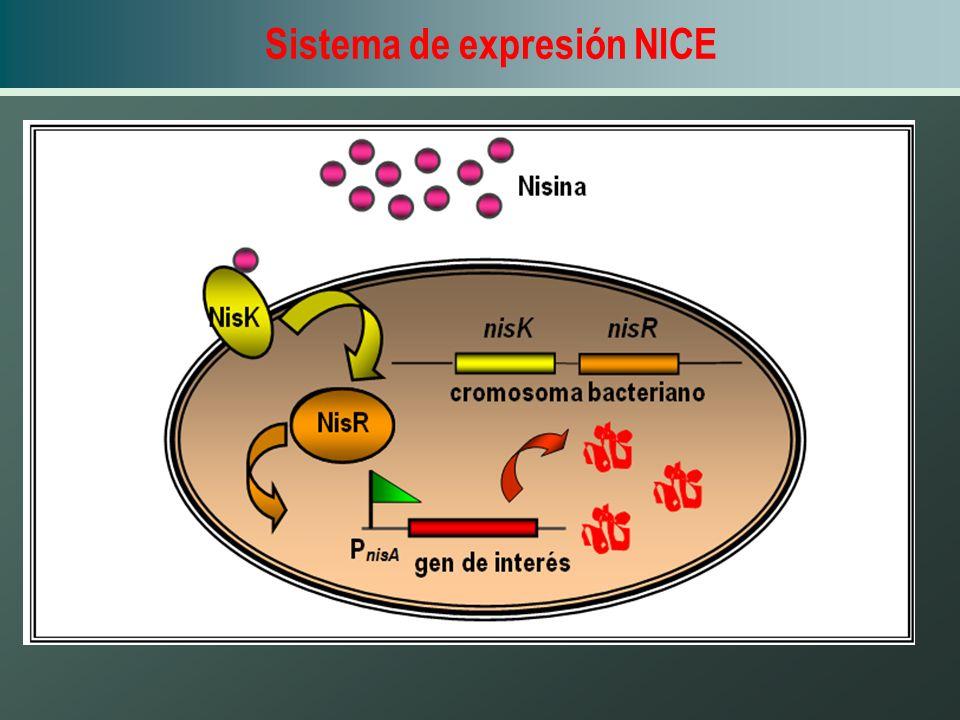 Sistema de expresión NICE