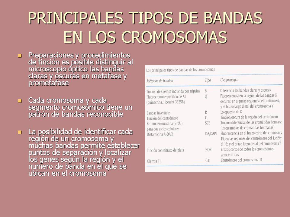 PRINCIPALES TIPOS DE BANDAS EN LOS CROMOSOMAS