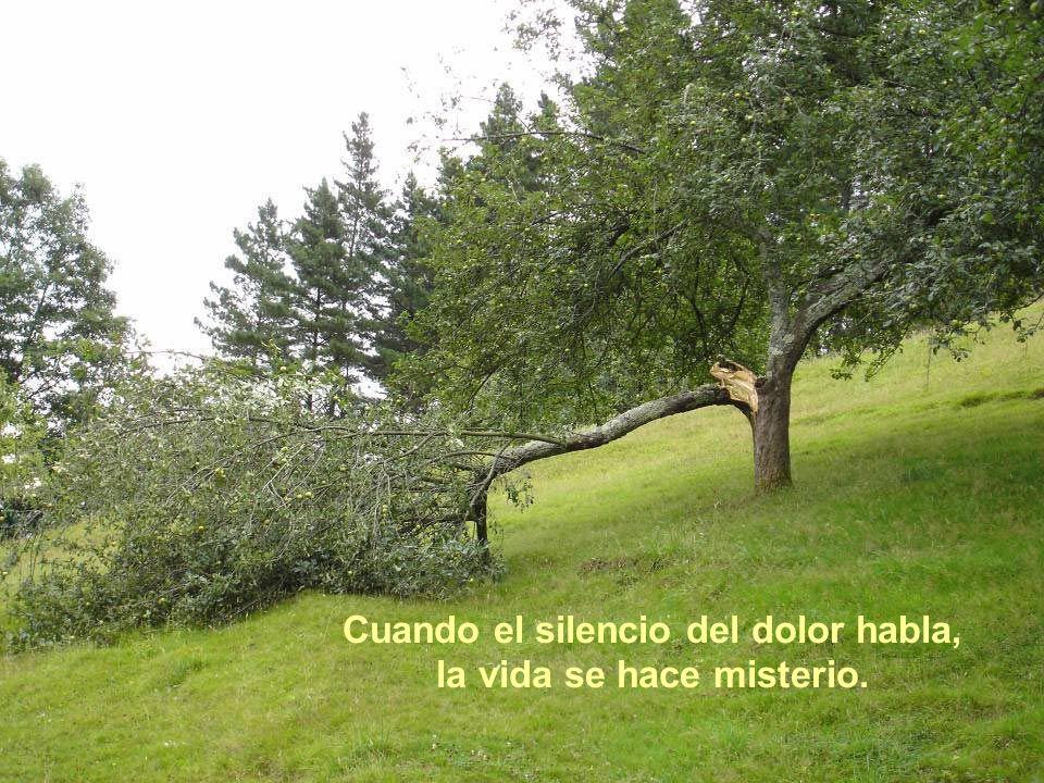 Cuando el silencio del dolor habla, la vida se hace misterio.