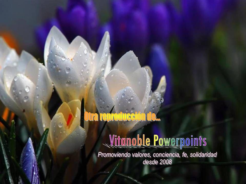 Otra reproducción de... www.vitanoblepowerpoints.net