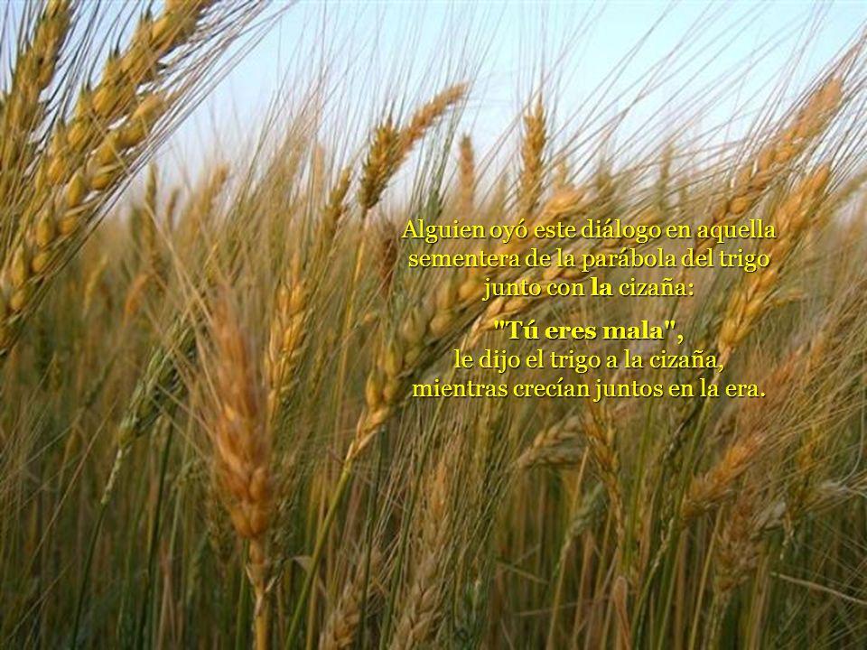 Alguien oyó este diálogo en aquella sementera de la parábola del trigo junto con la cizaña: