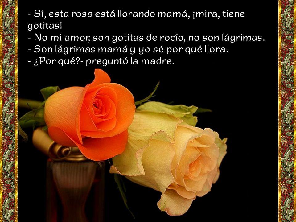 - Sí, esta rosa está llorando mamá, ¡mira, tiene gotitas!