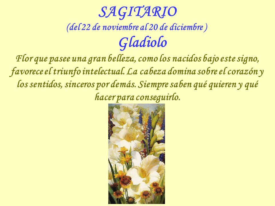 (del 22 de noviembre al 20 de diciembre ) Gladiolo