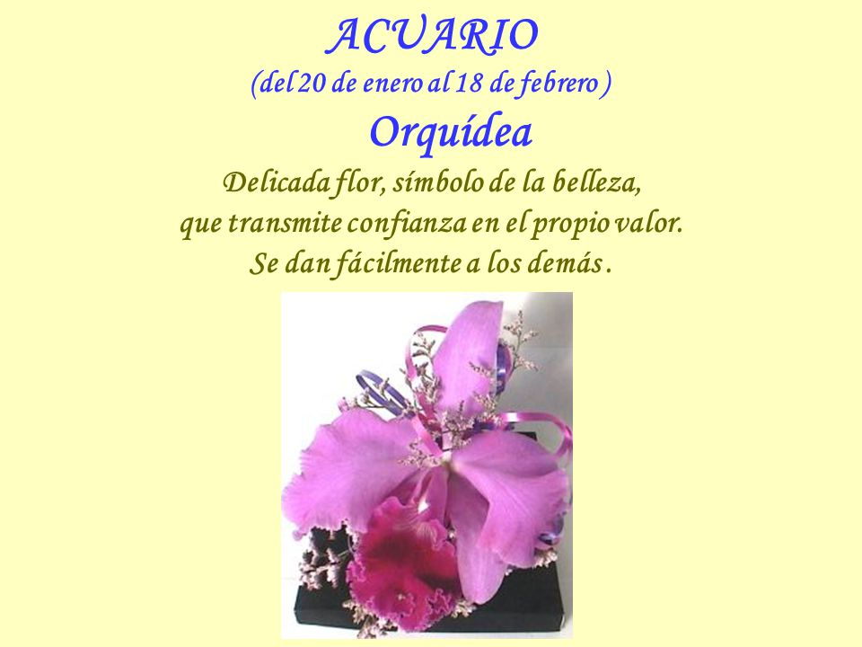 ACUARIO Delicada flor, símbolo de la belleza,
