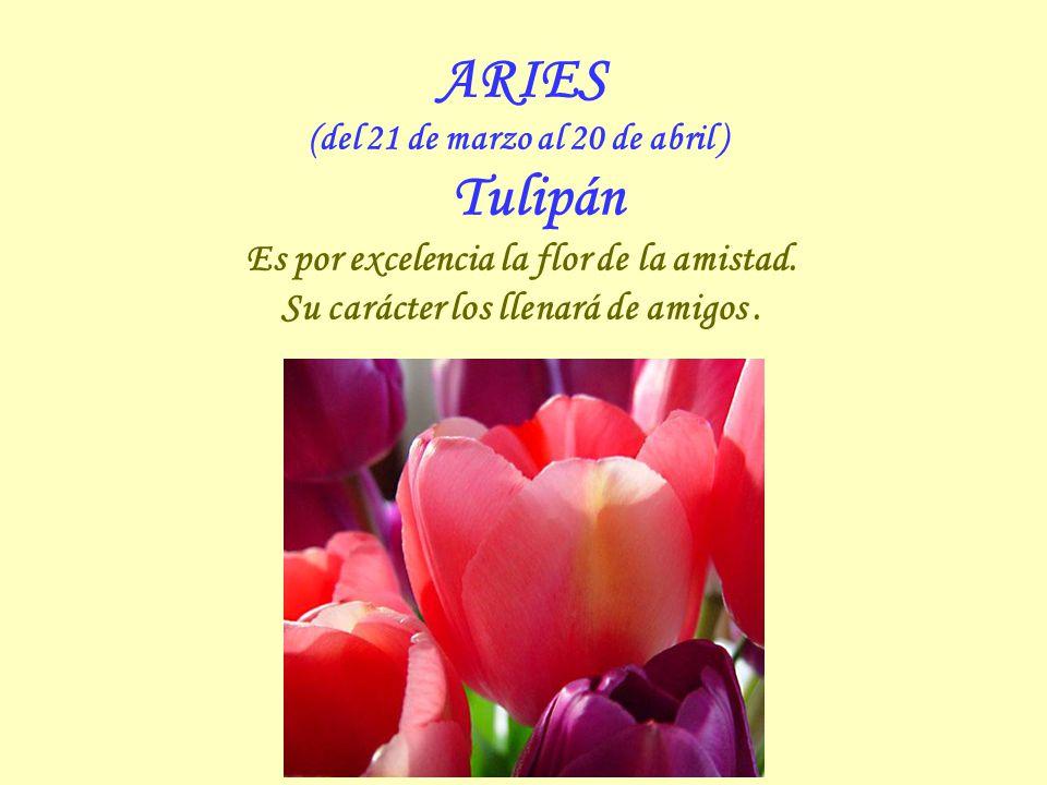 ARIES Es por excelencia la flor de la amistad.