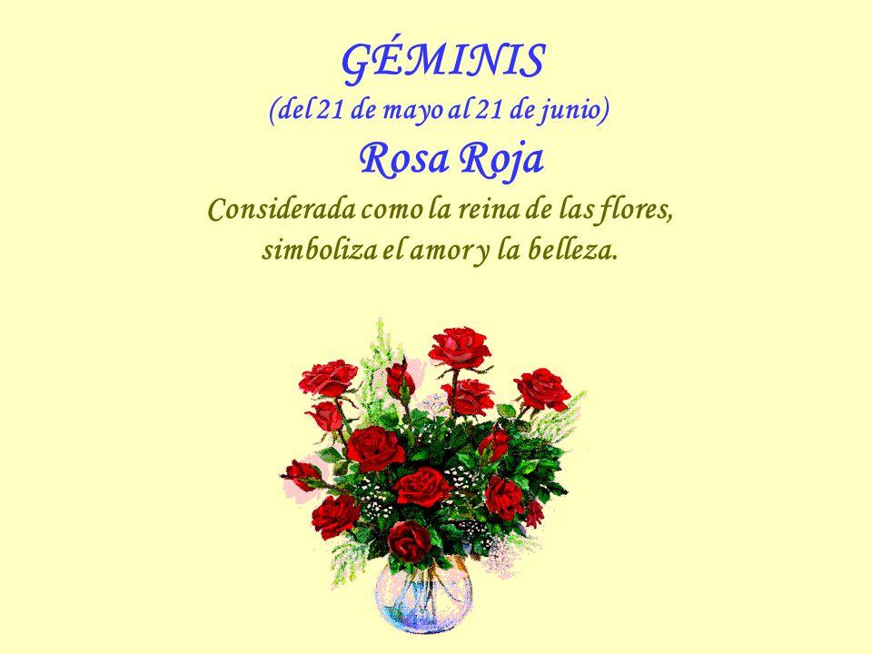 GÉMINIS Considerada como la reina de las flores,