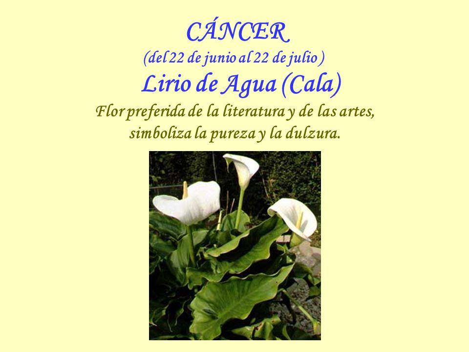 CÁNCER Flor preferida de la literatura y de las artes,