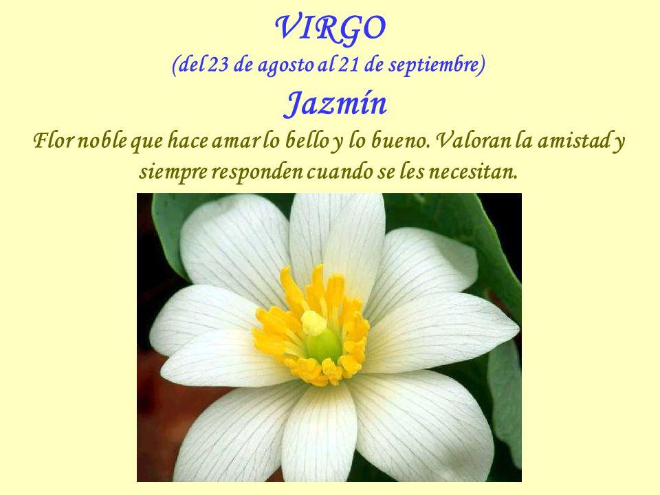 (del 23 de agosto al 21 de septiembre) Jazmín