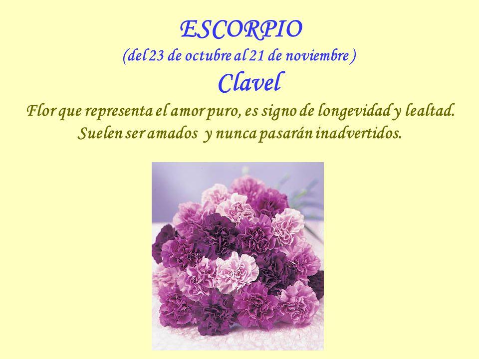 (del 23 de octubre al 21 de noviembre ) Clavel