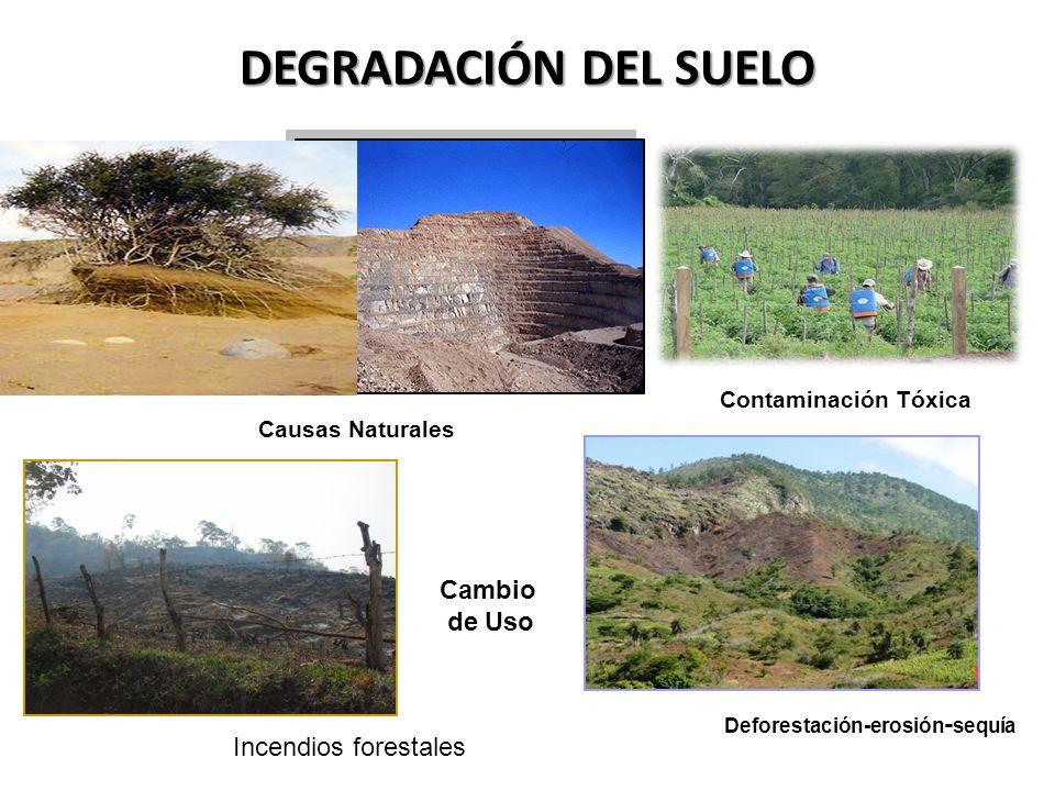 DEGRADACIÓN DEL SUELO Cambio de Uso Deforestación-erosión-sequía