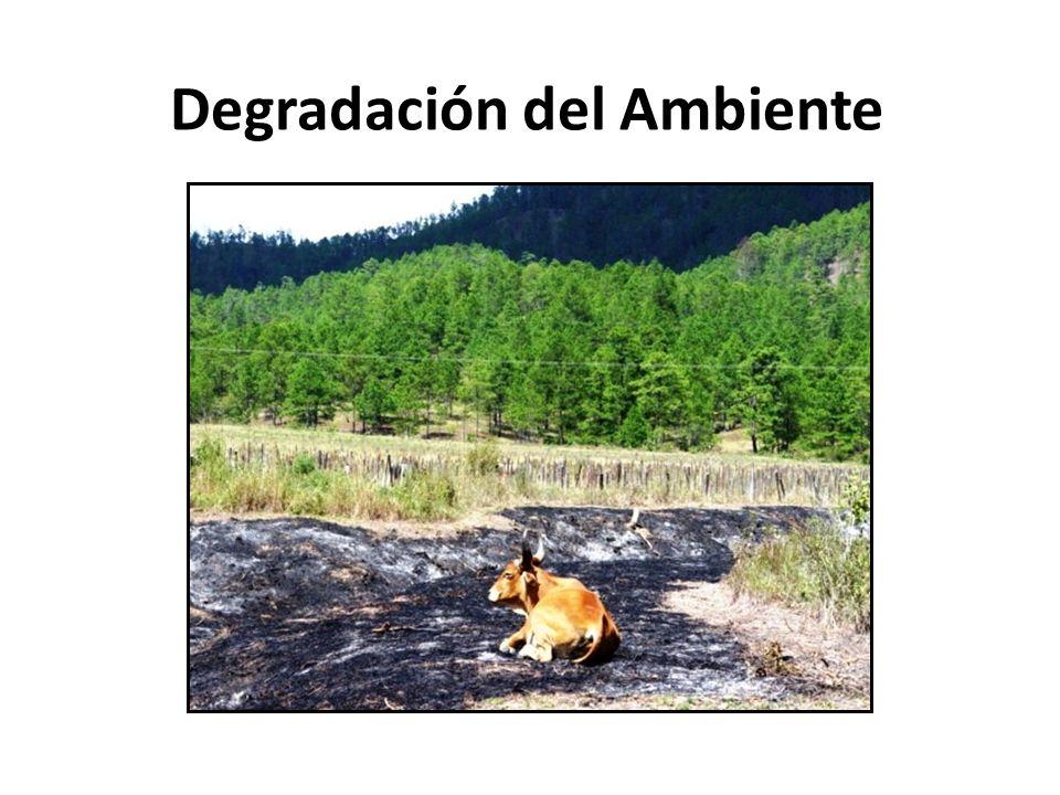 Degradación del Ambiente