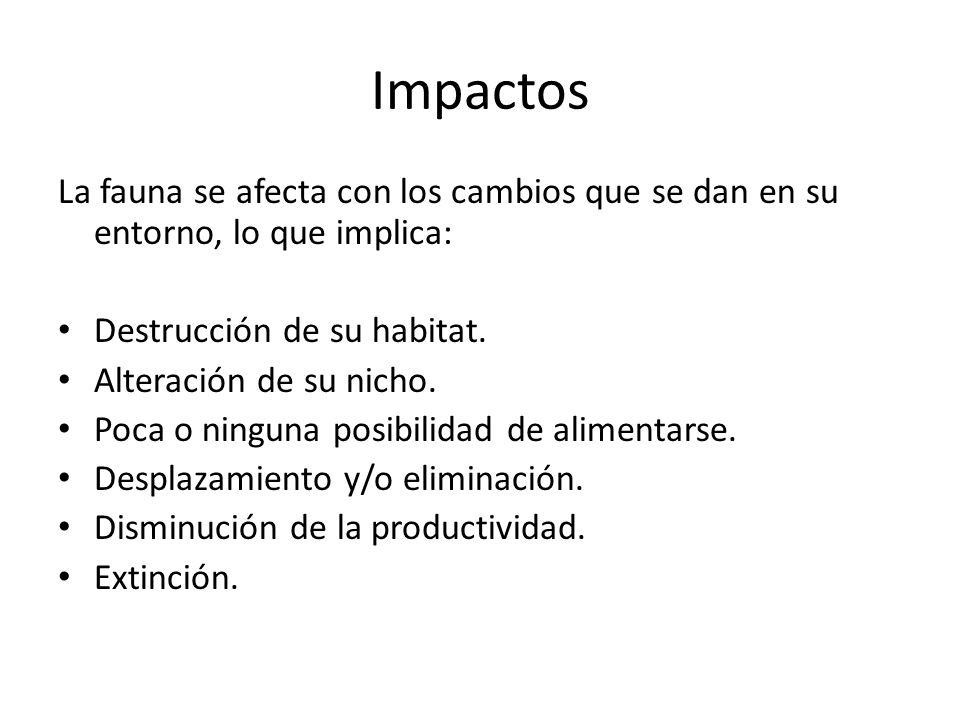 Impactos La fauna se afecta con los cambios que se dan en su entorno, lo que implica: Destrucción de su habitat.