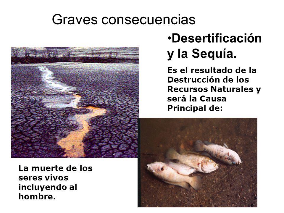 Graves consecuencias Desertificación y la Sequía.