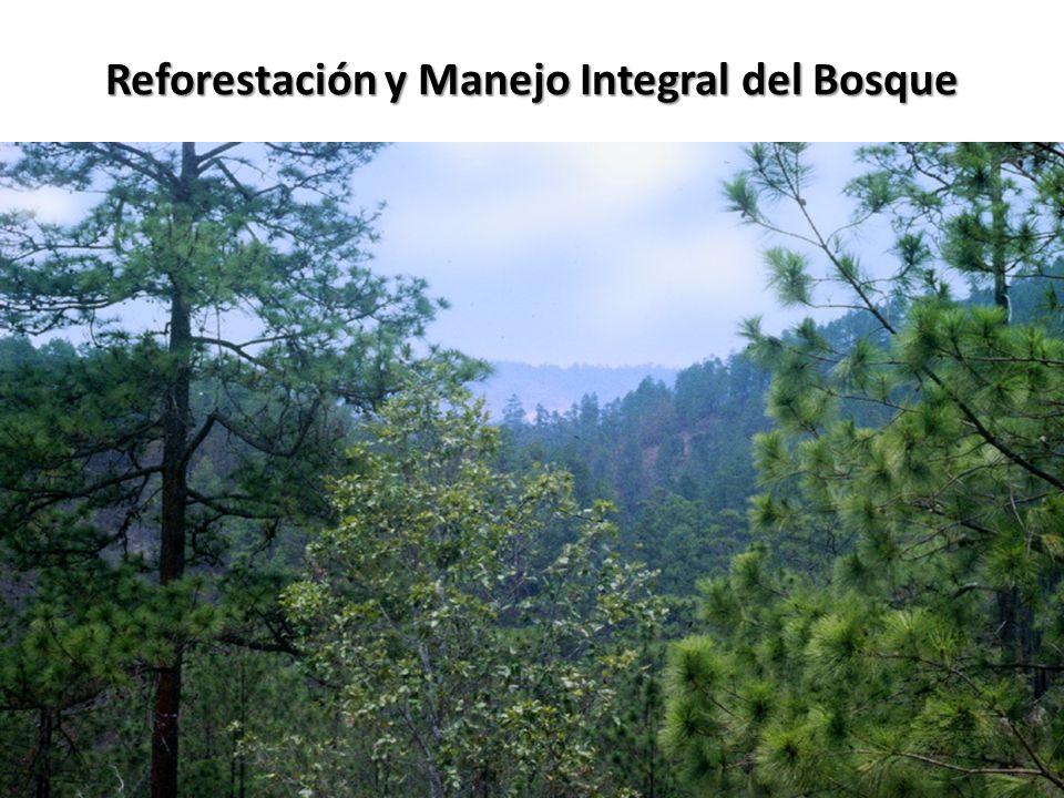 Reforestación y Manejo Integral del Bosque