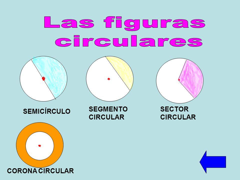 Las figuras circulares SEGMENTO CIRCULAR SECTOR CIRCULAR SEMICÍRCULO