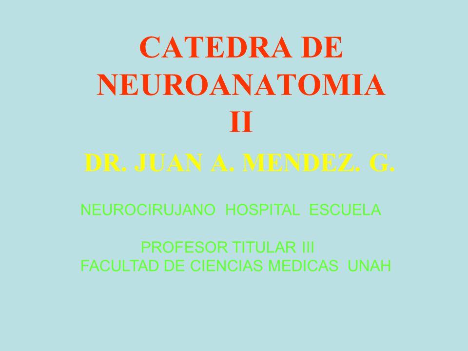 CATEDRA DE NEUROANATOMIA II