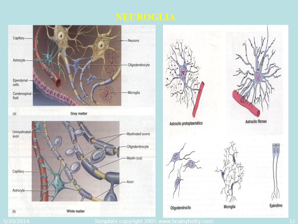 Template copyright 2005 www.brainybetty.com
