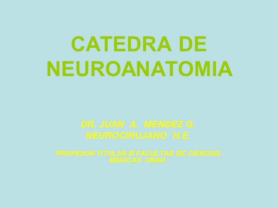 CATEDRA DE NEUROANATOMIA