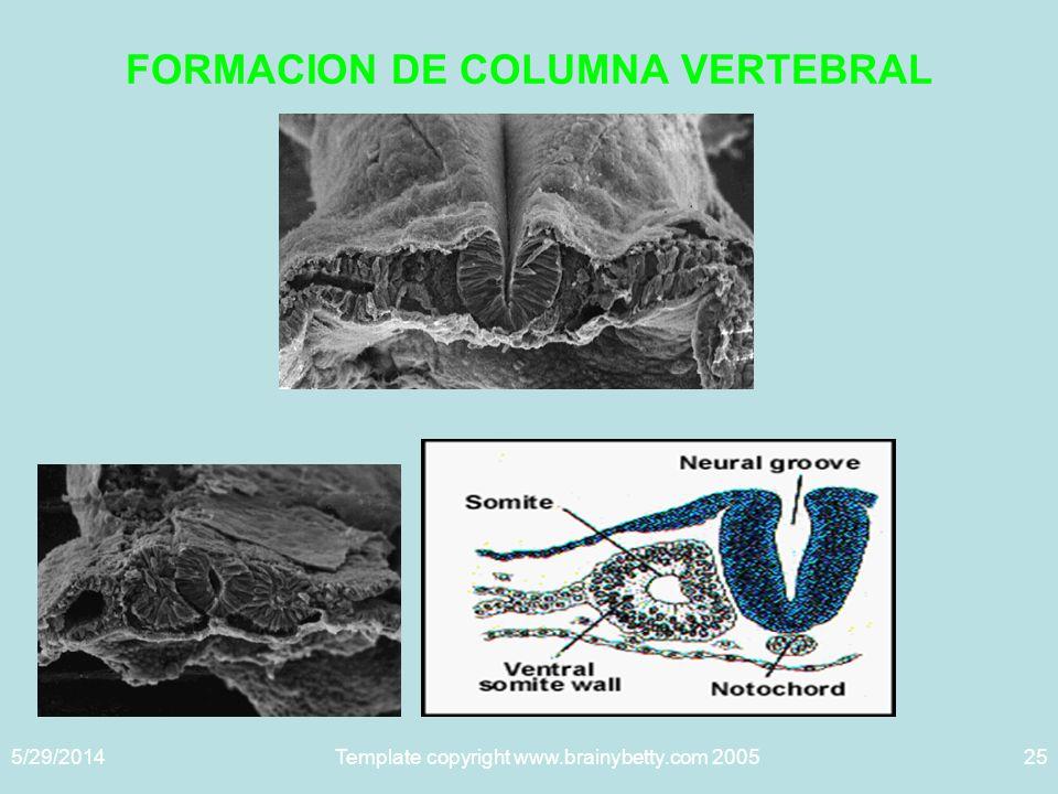 FORMACION DE COLUMNA VERTEBRAL