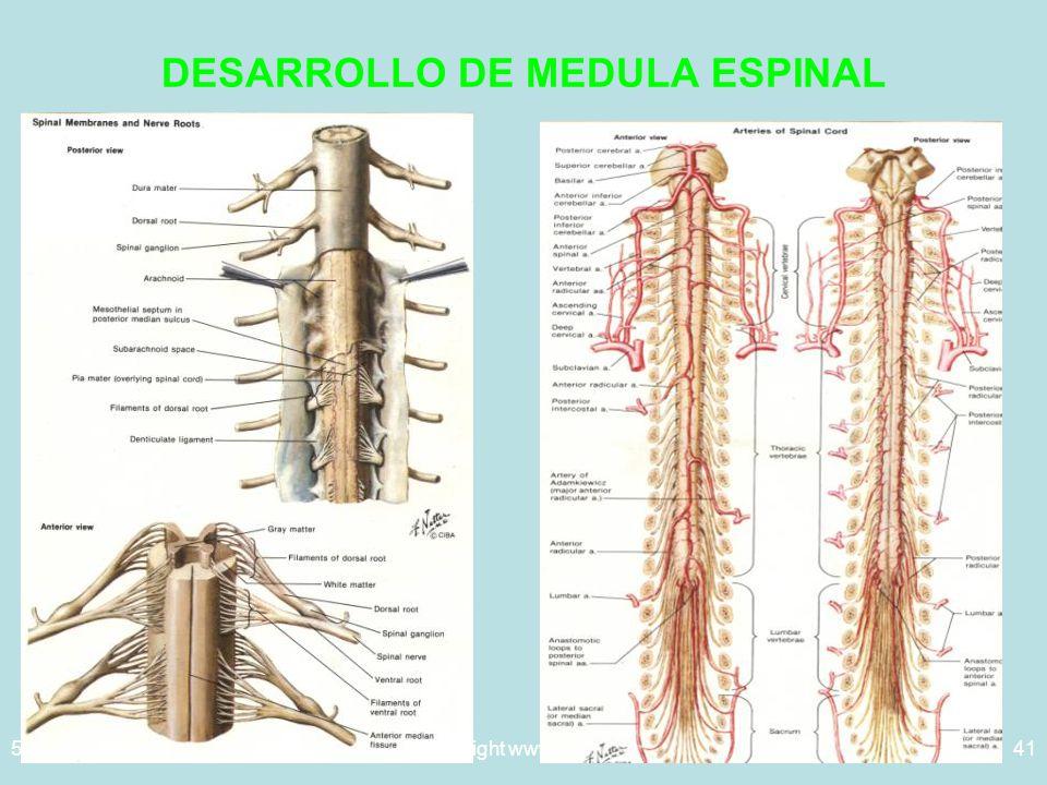 DESARROLLO DE MEDULA ESPINAL