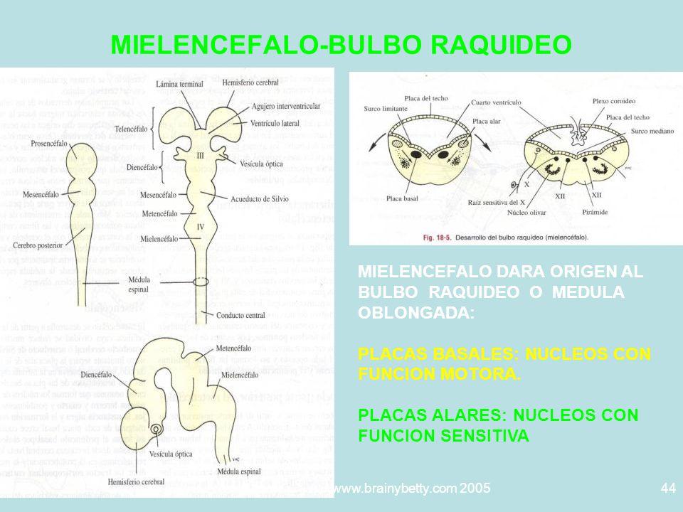 MIELENCEFALO-BULBO RAQUIDEO