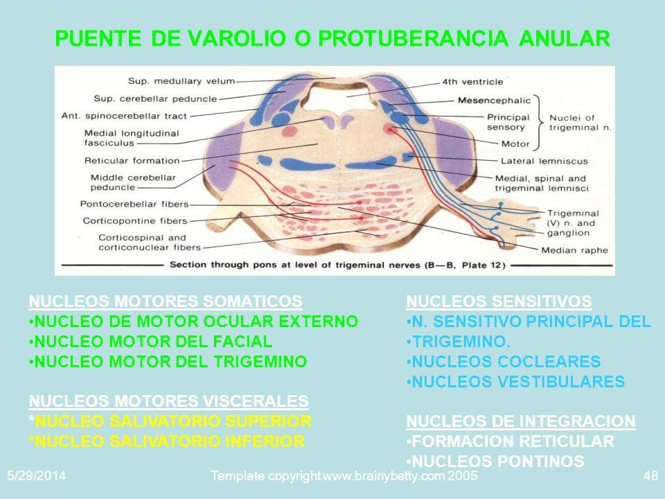 PUENTE DE VAROLIO O PROTUBERANCIA ANULAR