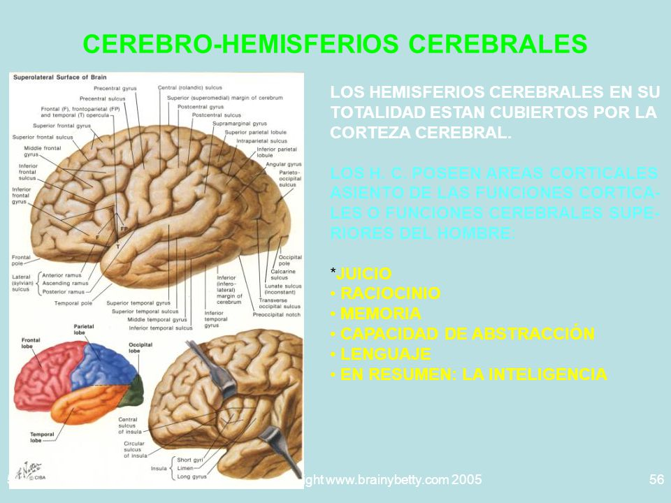 CEREBRO-HEMISFERIOS CEREBRALES