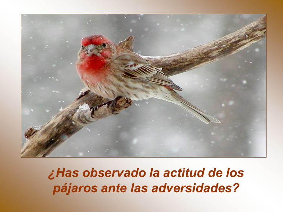 ¿Has observado la actitud de los pájaros ante las adversidades