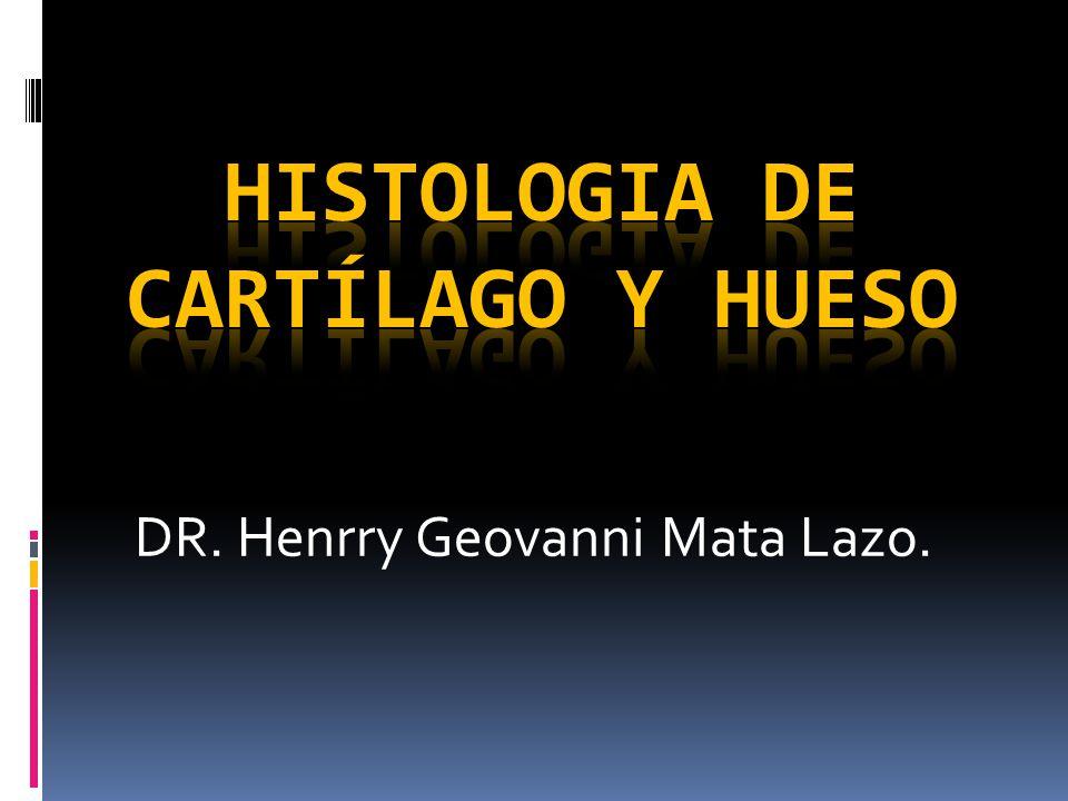 HISTOLOGIA DE CARTÍLAGO Y HUESO