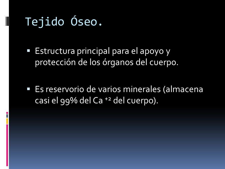 Tejido Óseo. Estructura principal para el apoyo y protección de los órganos del cuerpo.