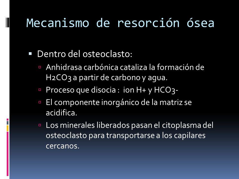 Mecanismo de resorción ósea