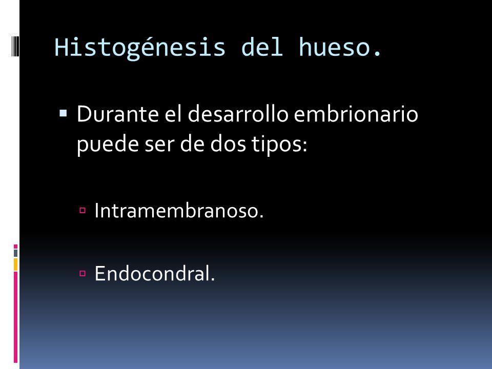 Histogénesis del hueso.
