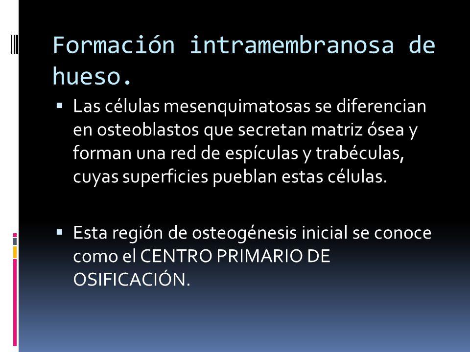 Formación intramembranosa de hueso.