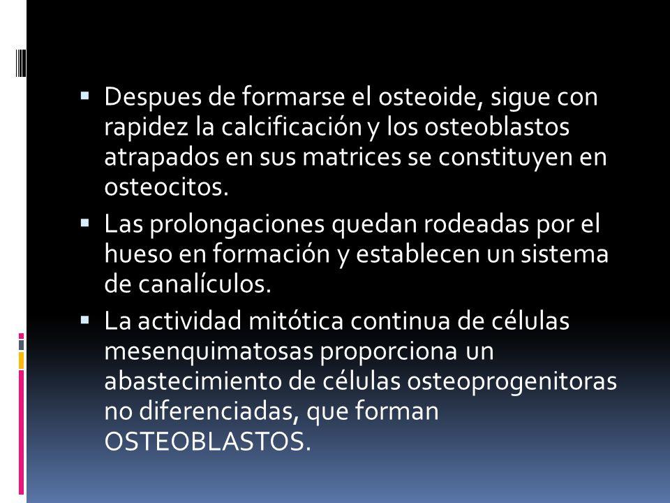 Despues de formarse el osteoide, sigue con rapidez la calcificación y los osteoblastos atrapados en sus matrices se constituyen en osteocitos.