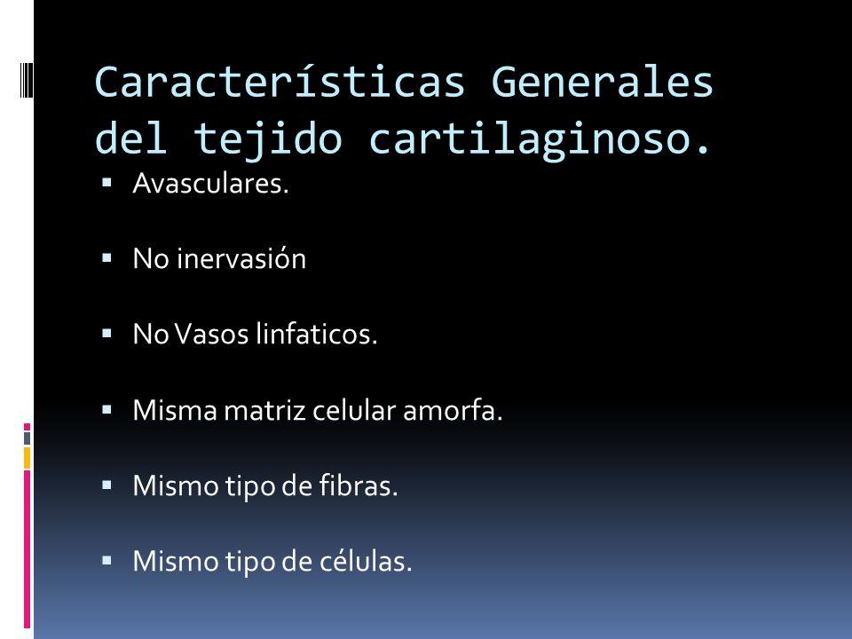 Características Generales del tejido cartilaginoso.