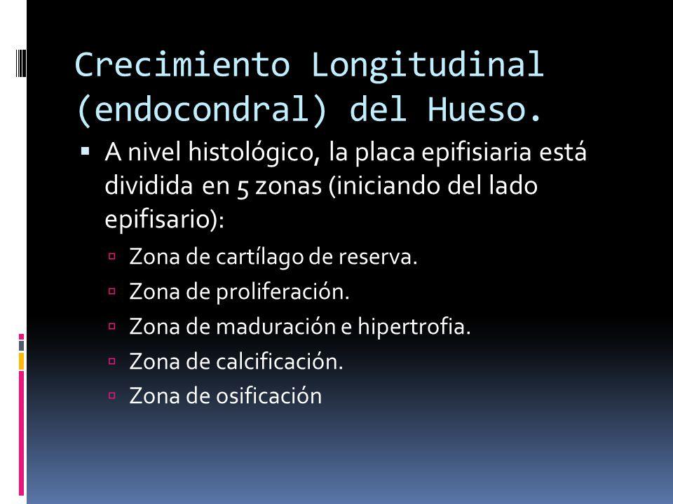 Crecimiento Longitudinal (endocondral) del Hueso.