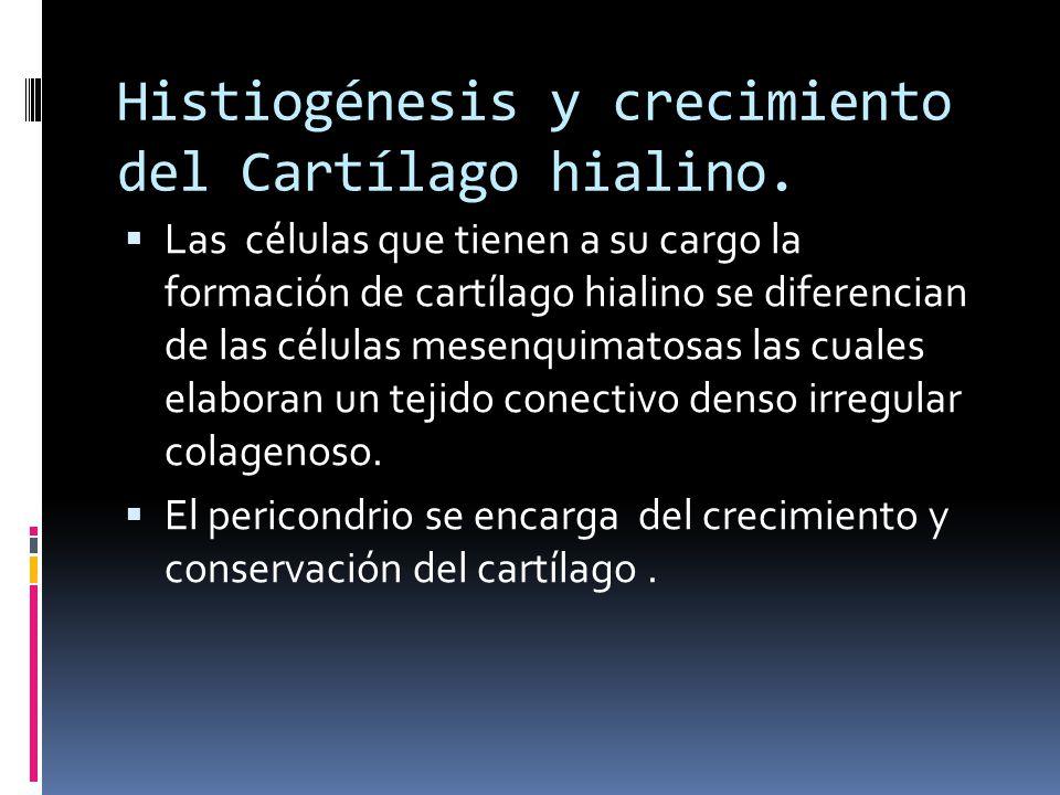 Histiogénesis y crecimiento del Cartílago hialino.