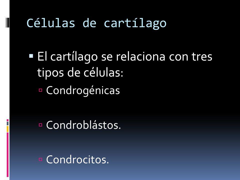 El cartílago se relaciona con tres tipos de células: