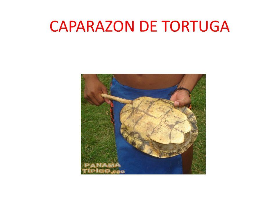 CAPARAZON DE TORTUGA