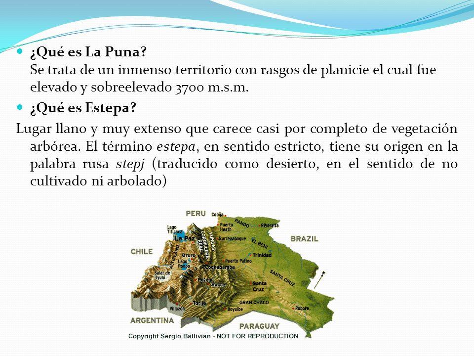 ¿Qué es La Puna Se trata de un inmenso territorio con rasgos de planicie el cual fue elevado y sobreelevado 3700 m.s.m.