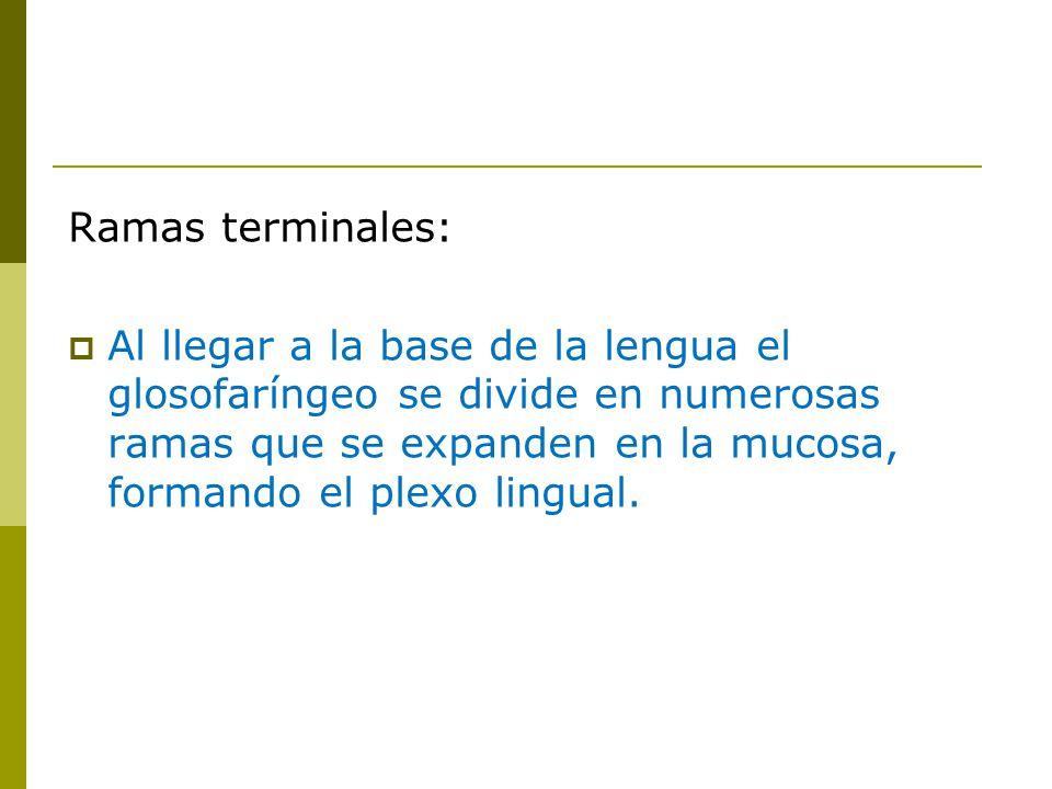 Ramas terminales: