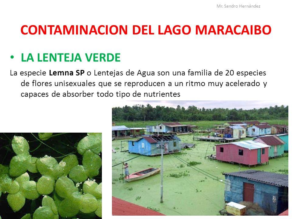 CONTAMINACION DEL LAGO MARACAIBO