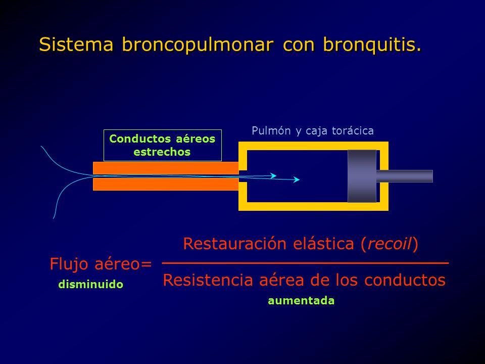 Sistema broncopulmonar con bronquitis.